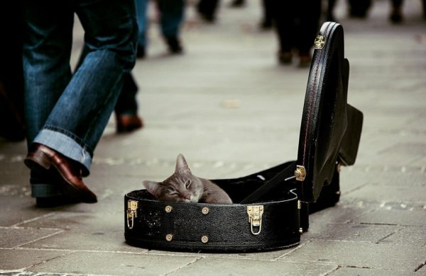 a cat laying in a guitar case